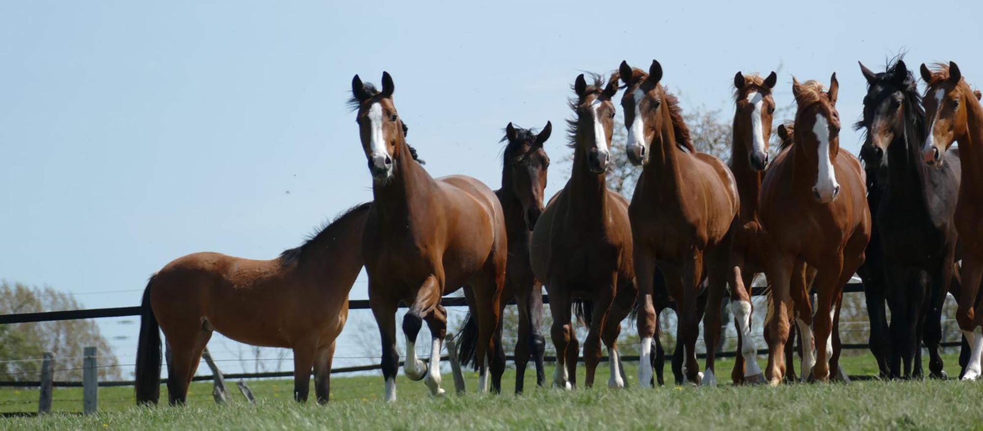 Zucht & Aufzucht von Pferden